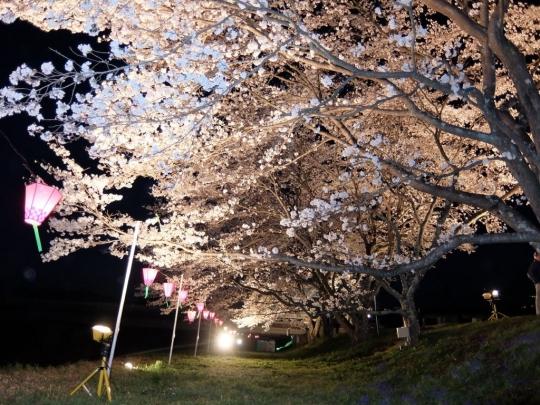 sakura_20180402_007.jpg
