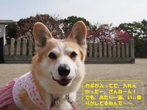 P2240002_convert_20150225003310.jpg