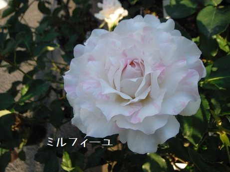 20180429 mirufi-yu