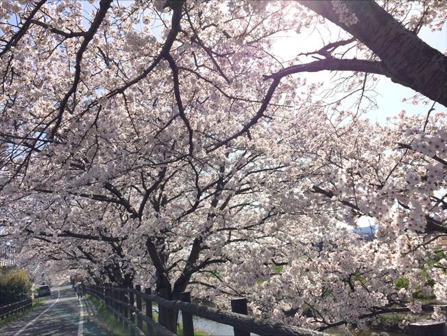 秋篠川2018 04-2