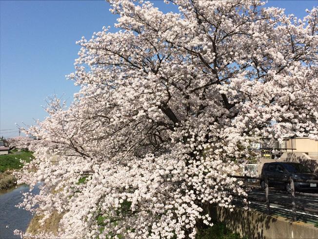 秋篠川2018 04-4
