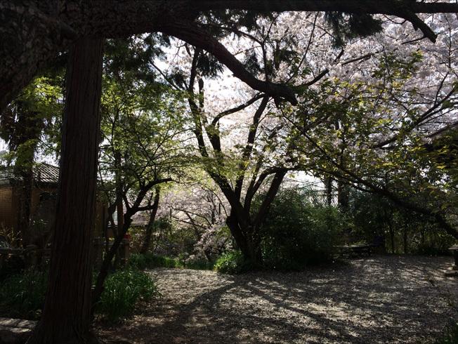 奈良町 東大寺2018 04-2