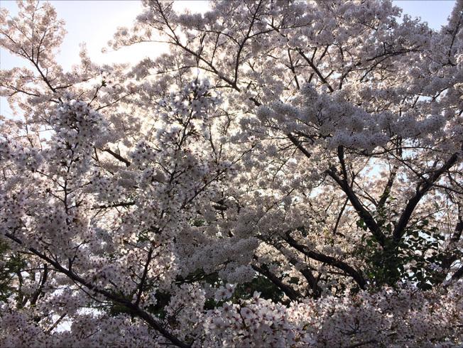 奈良町 東大寺2018 04-3