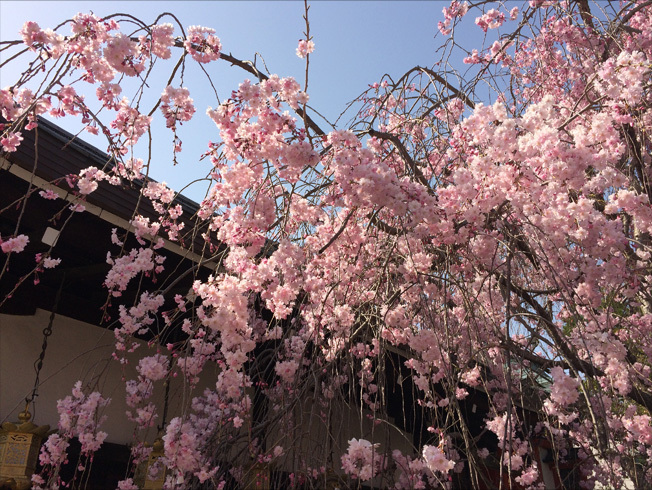 奈良町 東大寺2018 04-5