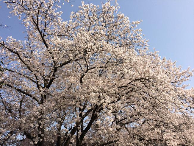 奈良町 東大寺2018 04-7
