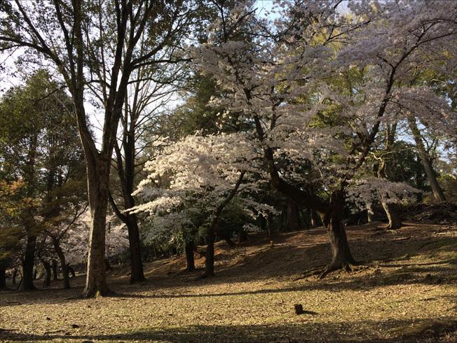 奈良町 東大寺2018 04-12