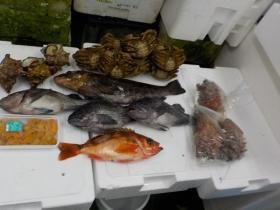 12鮮魚セット2018419