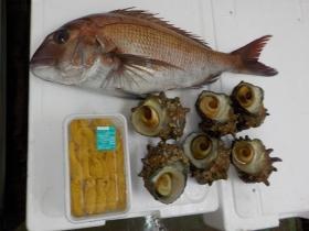 18鮮魚セット2018419