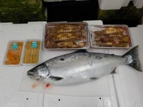19鮮魚セット2018419