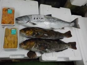 22鮮魚セット2018419