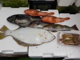 24鮮魚セット2018419