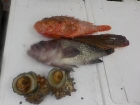 12鮮魚セット2018420