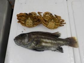 10鮮魚セット2018421