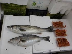 1鮮魚セット2018423