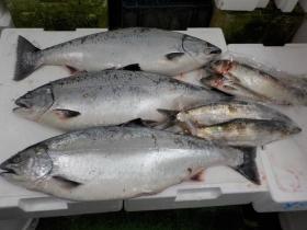 7鮮魚セット2018423