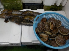 7鮮魚セット2018501