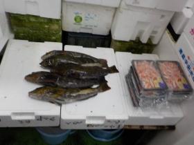8鮮魚セット2018501