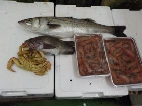 10鮮魚セット2018501