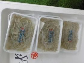 白魚2018502