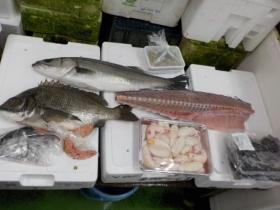 2鮮魚セット2018503