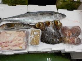 13鮮魚セット2018503