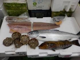 4鮮魚セット2018514