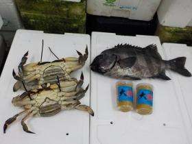 18鮮魚セット2018518