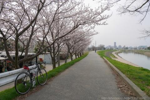 180402SAKURA_01.jpg