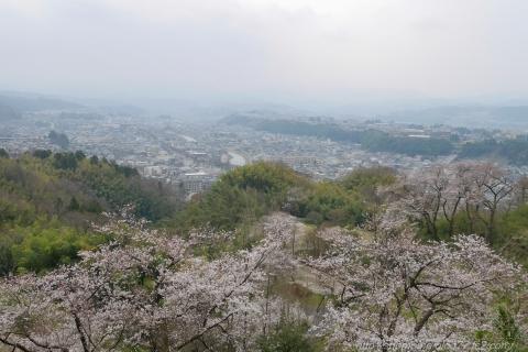 180402SAKURA_02.jpg
