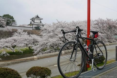 180402SAKURA_05.jpg