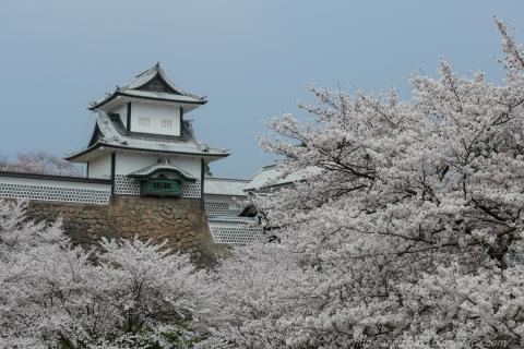 180402SAKURA_06.jpg