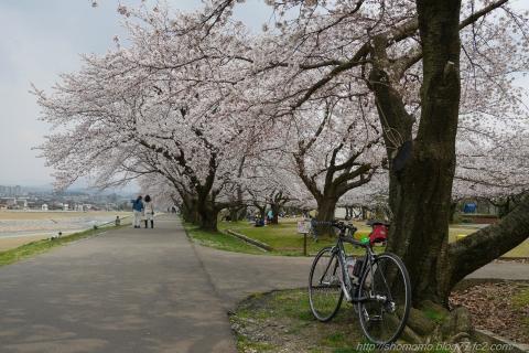 180402SAKURA_09.jpg