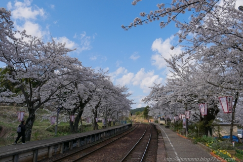 180409SAKURA_02.jpg