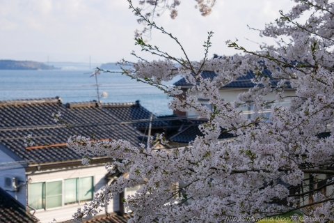 180409SAKURA_05.jpg