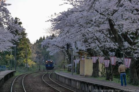 180409SAKURA_07.jpg