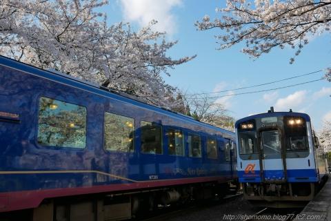 180409SAKURA_10.jpg
