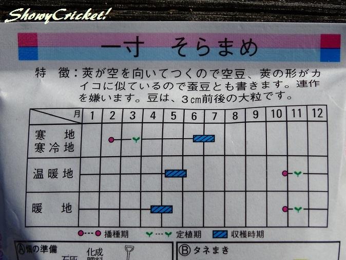 2017-11-12ソラマメ (3)