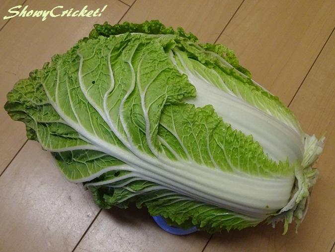 2017-12-17白菜 (12)