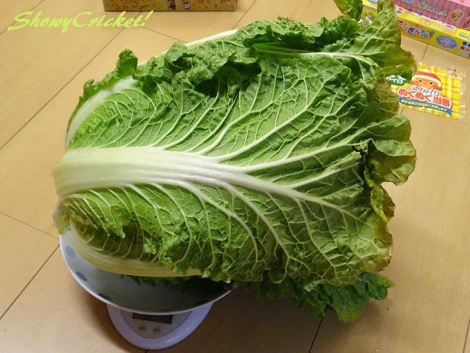 2018-01-06白菜 (8)