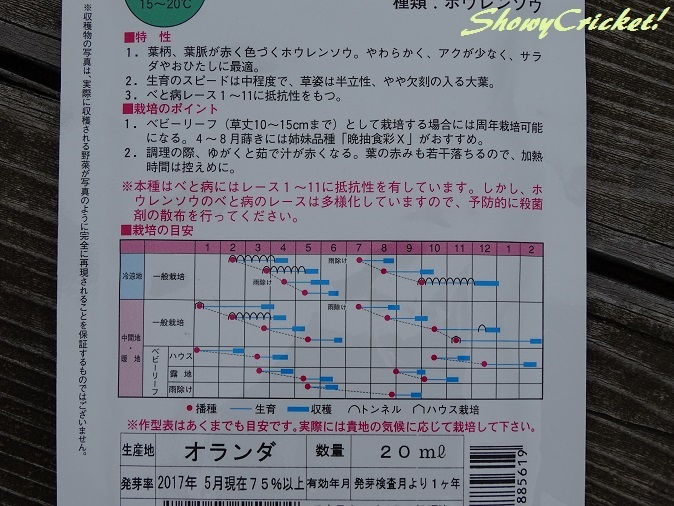 2018-03-16ほうれん草 (5)