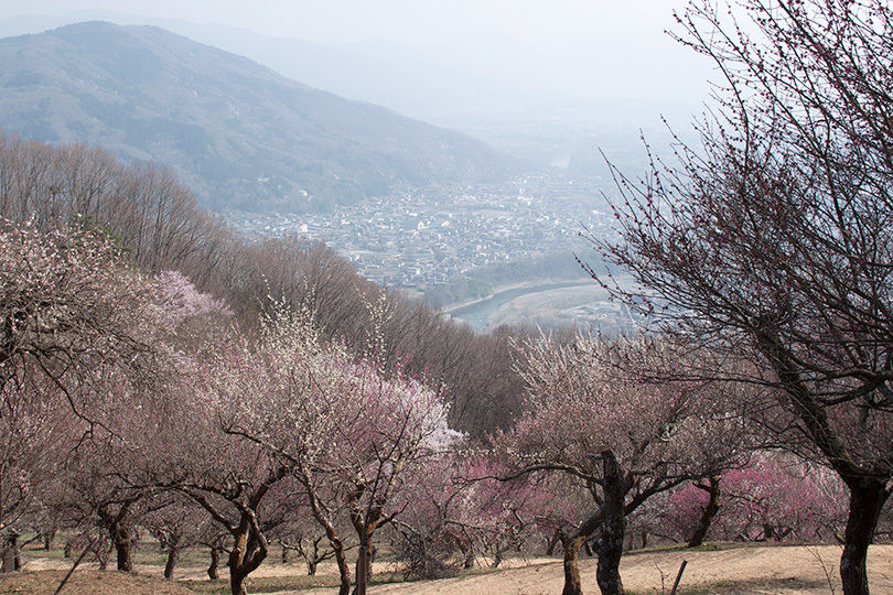 山と川IMG_0409