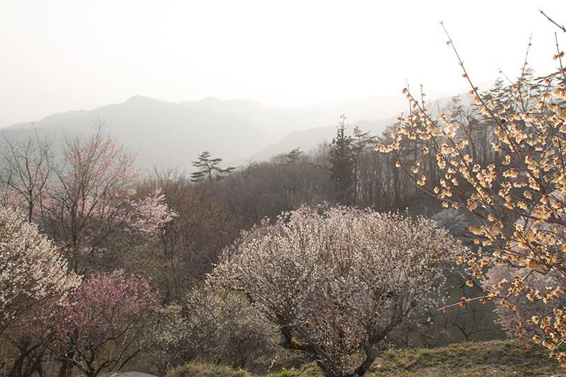 山、ロウバイ明IMG_0572