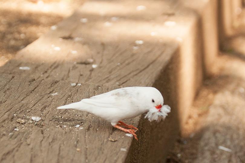 白キンカ巣材_1159