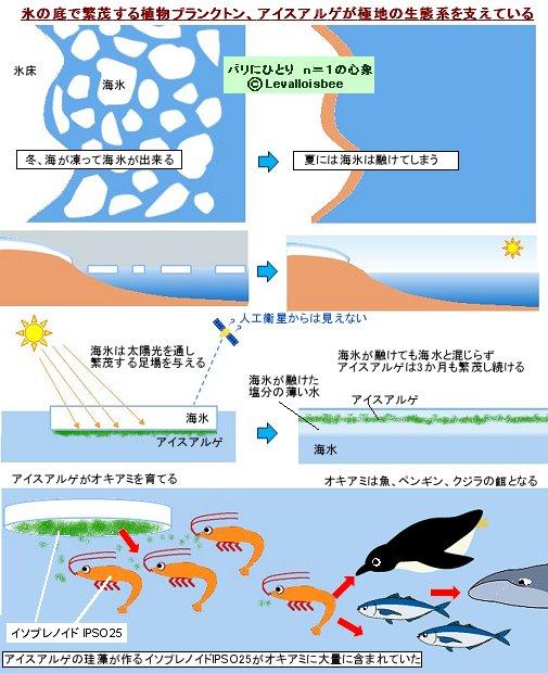 海氷に生えるアイスアルゲが生態系を支えている
