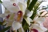 さくらと花 (3)