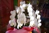 さくらと花 (4)