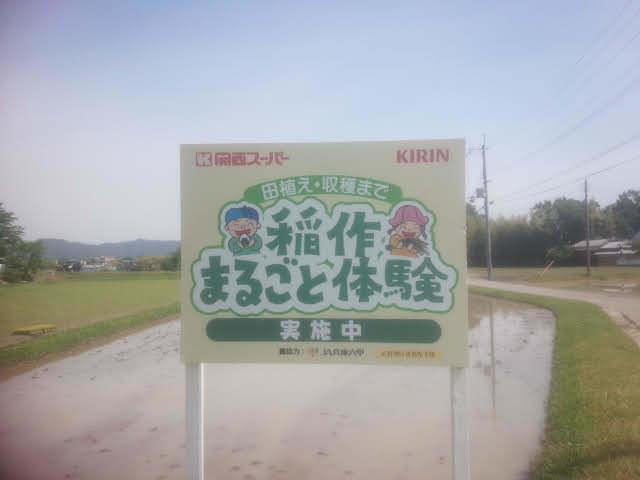 田植え体験01