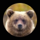 スタッフのクマです