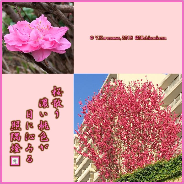 180403花桃ピンクLRG