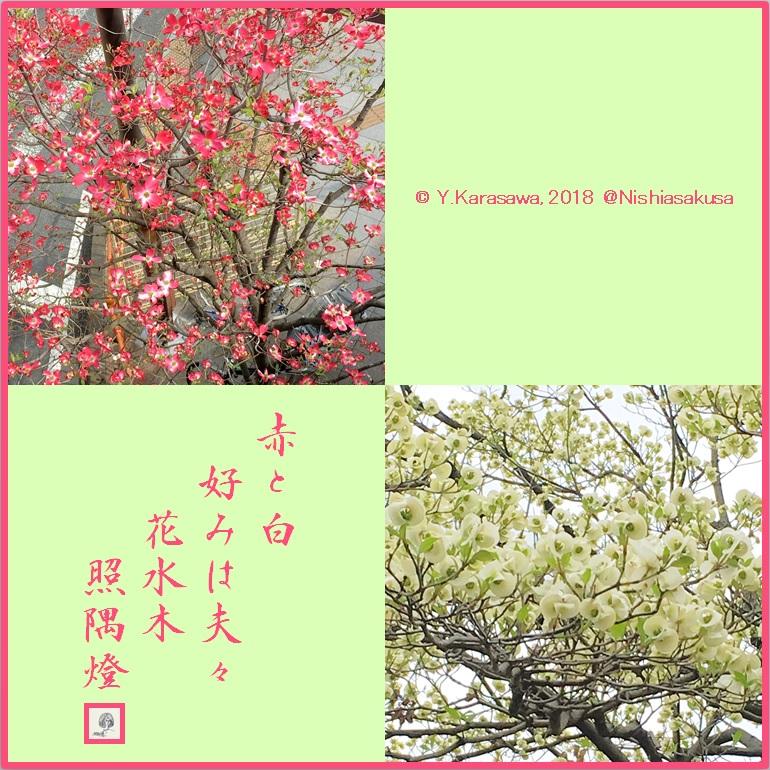 180427紅白の花水木LRG
